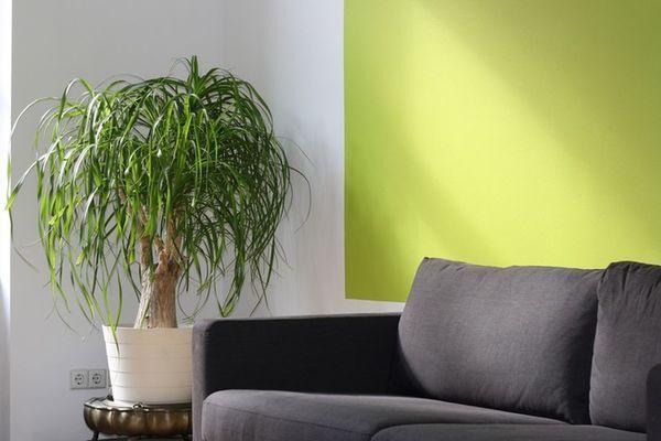 Huiskamer plant