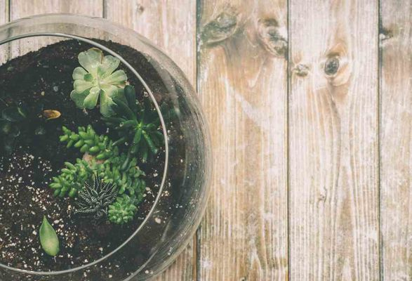 Plant in glazen Terrarium