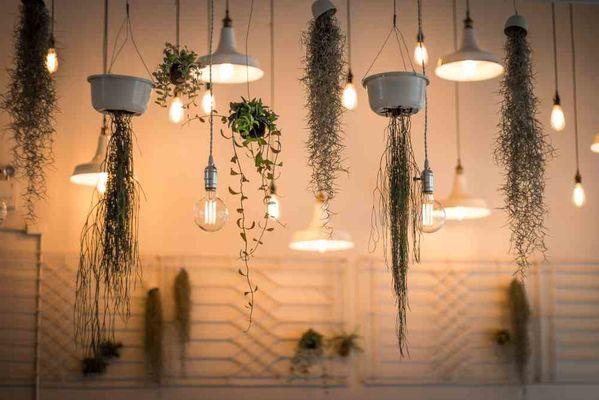 Planten Hangers