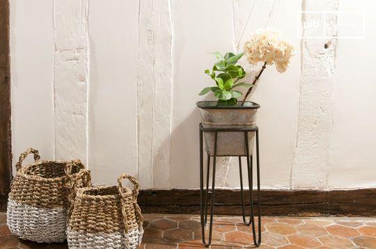Rebstock Planten Standaard