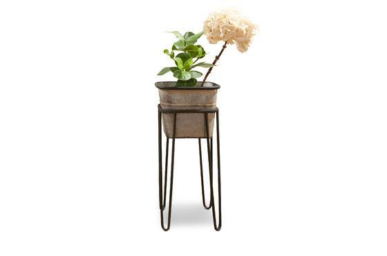 Rebstock Planten Standaard Productfoto